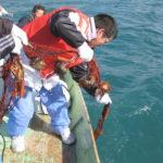地域おこし協力隊 水産業活性化支援業務(上ノ加江地区担当)
